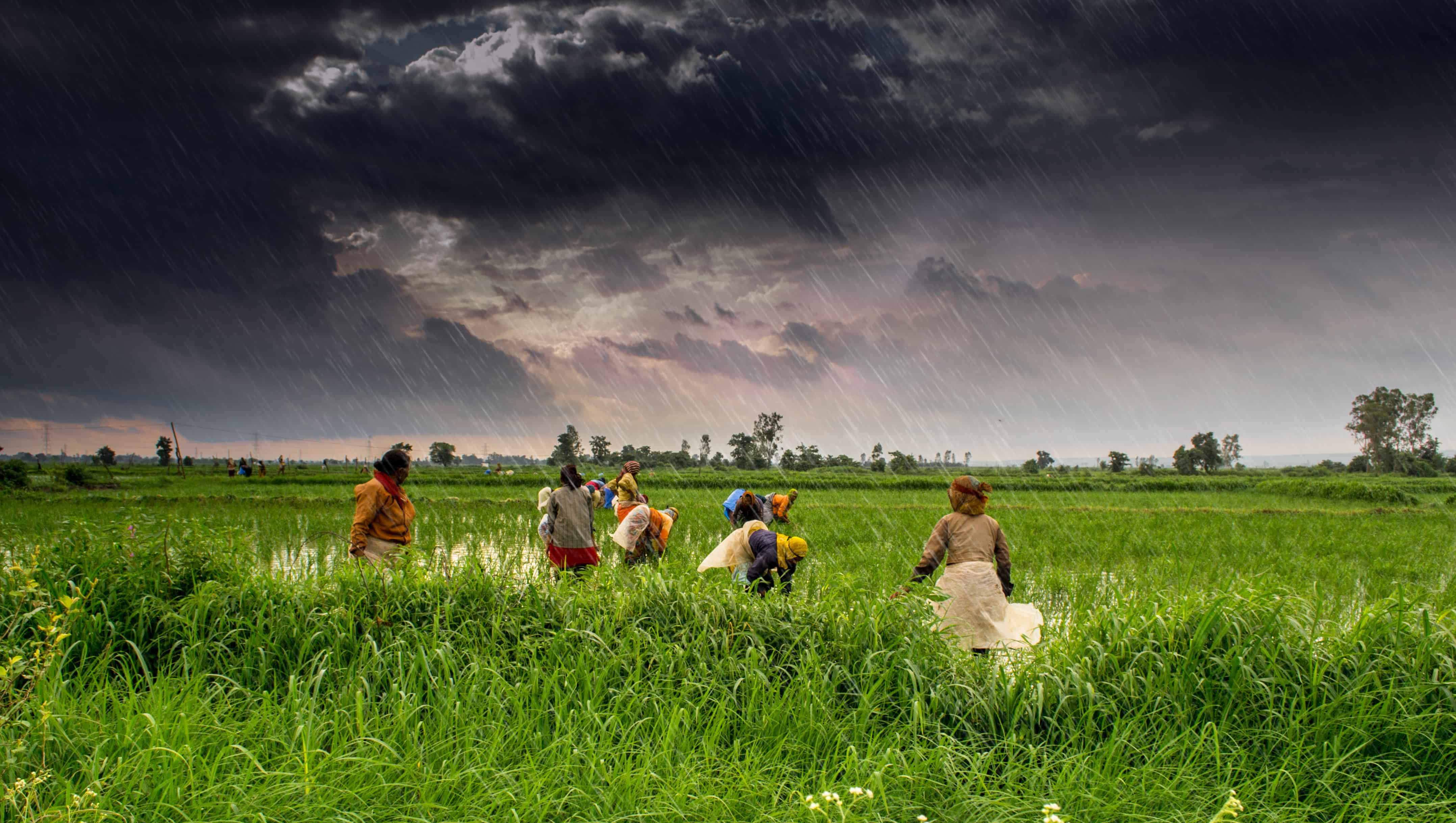 The great Indian Agrarian crisis