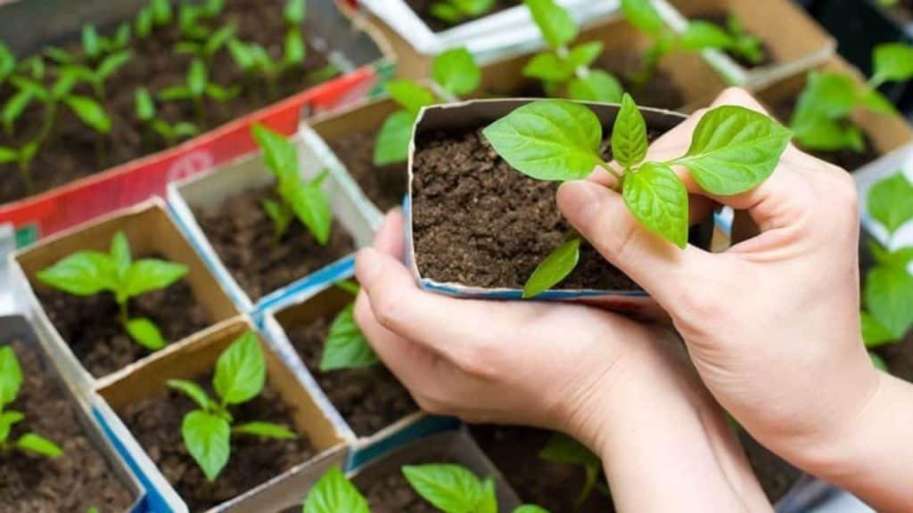 pandemic stricken summer (meet your garden)